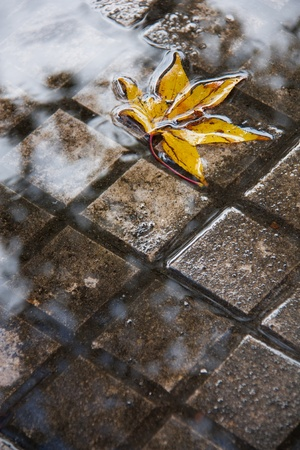submerge: Yellow tree leaf submerged into a puddle of the sidewalk where the clouds are reflected after an autumn storm