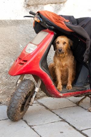 fidelidad: Perro que guarda la moto antigua y la chaqueta de su maestro en un pueblo rural