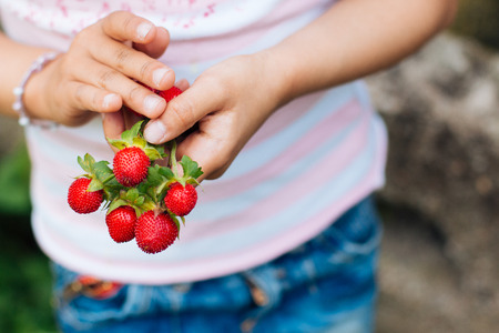 Little girl picking wild strawberries. Focus on the strawberries in hands. photo