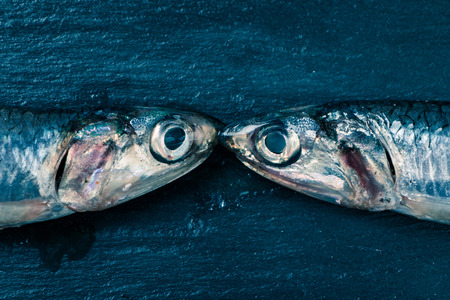 seem: Two fresh anchovies seem kissing on a slate background
