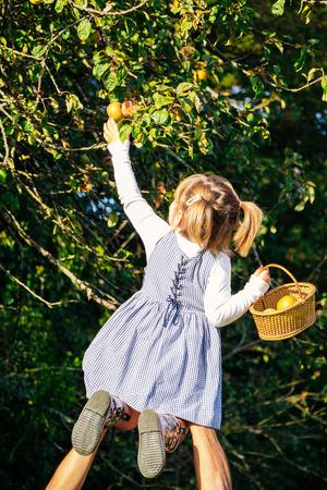 Papa helfende niedlich todler mit einem Korb, um Äpfel vom Baum