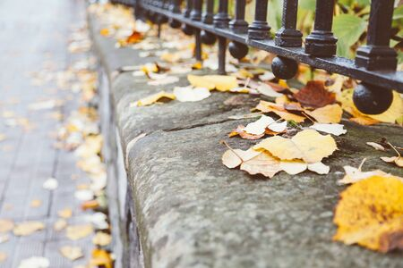shallow depth of field: Fallen linden leaves on a wall next to sidewalk. Shallow depth of field. Stock Photo