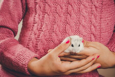 dwarf hamster: Hands of a girl with nails polished in pink holding a white hamster