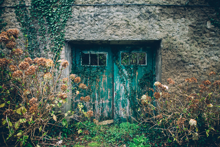 Old aquamarine painted door of abandoned rural house surrounded by hydrangeas and ivy