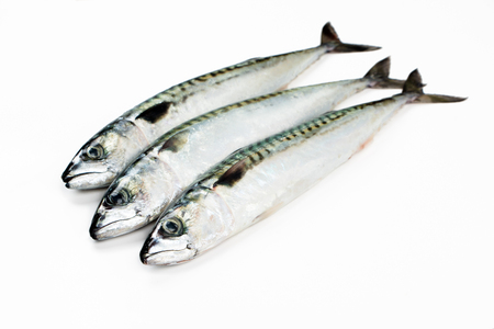 Fresh Mackerel fish isolated on white Banco de Imagens