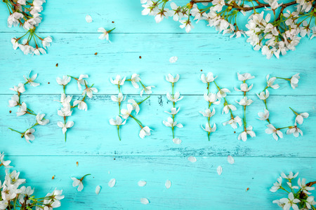 Spring word made of white cherry blossom flowers surrounded by cherry branches and flowers on a turquoise wooden planks . Top view, flat lay Stock Photo
