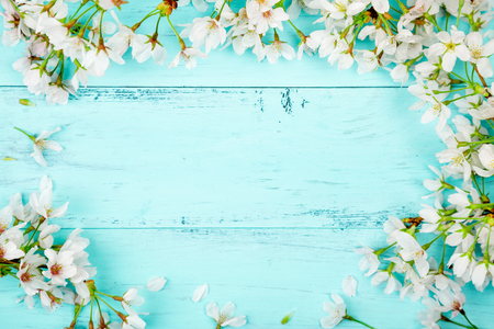 Spring background of white cherry blossom flowers making a frame on turquoise wooden planks. Top view