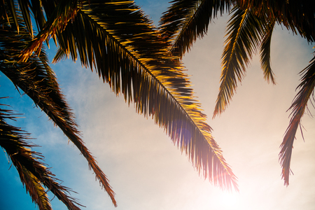 Palm tree leaves at sunset. Low angle view Stok Fotoğraf