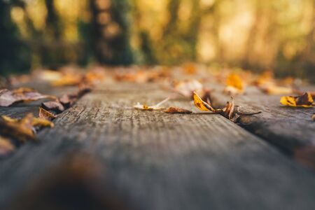 Background of rustic wooden table with dry fallen leaves in autumn outdoors. Selective focus. Shallow depth of field Stockfoto