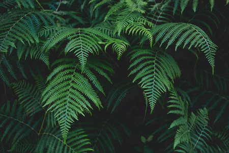 Background of fern leaves in the forest Imagens - 151447169