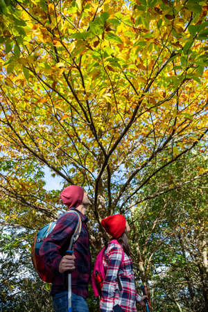 Father and his teenage daughter admiring the color of the leaves of a young chestnut in autumn