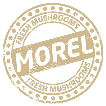 greengrocer: morel mushroom stamp Illustration