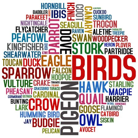 pigeon owl: word collage about birds Stock Photo
