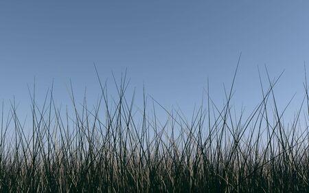 Tall grass under blue sky