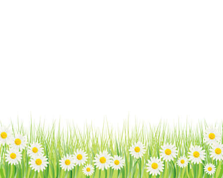 white daisy background Vector