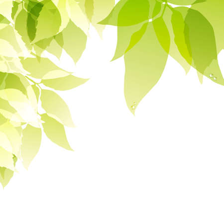 green background Vector