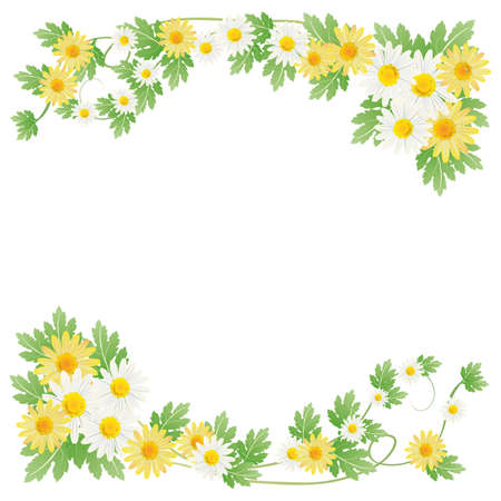 white daisy: daisy background Illustration
