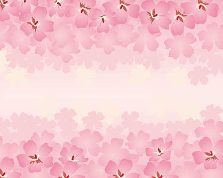 ciliegio in fiore: fiore di ciliegio sfondo