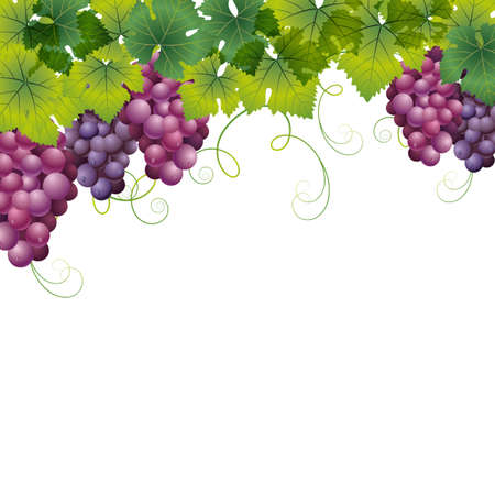 wine and grapes: grape background Illustration