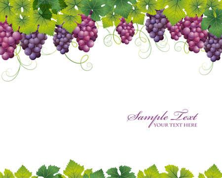 grape background Stock Vector - 12054610