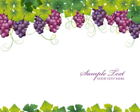 grapevine: grape background Illustration