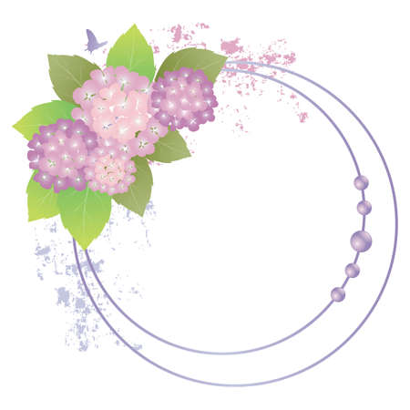 marco del Hydrangea
