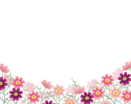 cosmos flower: cosmos background Illustration