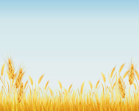 grain fields: crop background