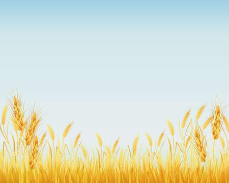 tło upraw