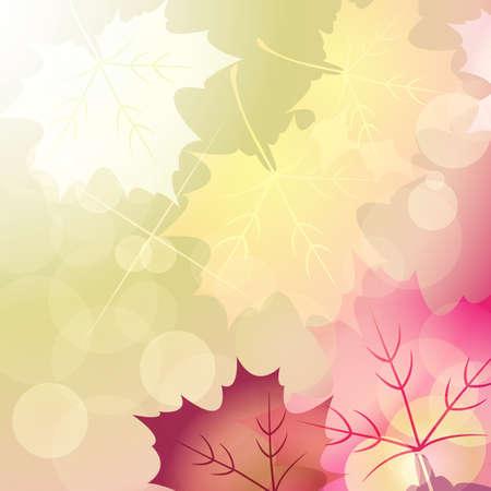 단풍 나무와 빛 배경