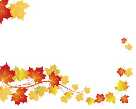 autumn leaf frame: arce fondo Vectores