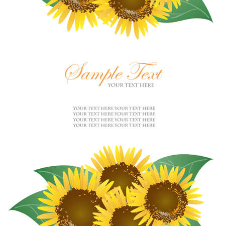 sunflower background  Illustration