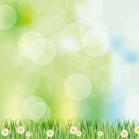 zomertuin: voorjaar achtergrond met daisy