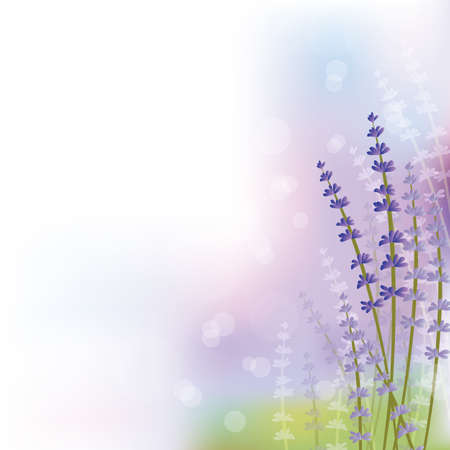 healing plant: lavender background