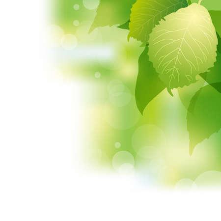 brightness: green leaves background Illustration