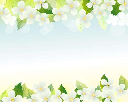 jasmine background Vector