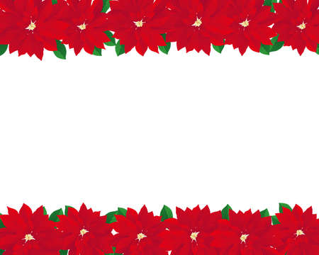 poinsettia background Vector