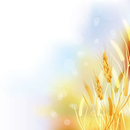 barley field: crop background
