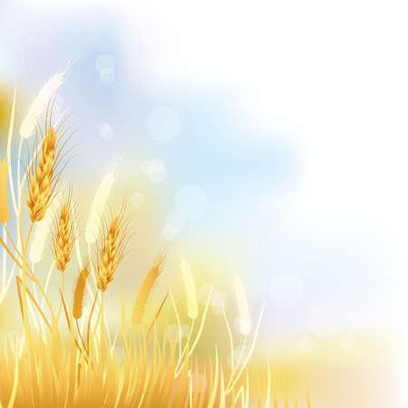 cosecha de trigo: cosecha fondo