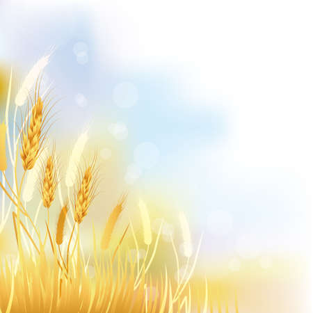 wheat illustration: crop sfondo Vettoriali