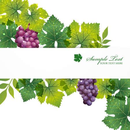 grape background Vectores