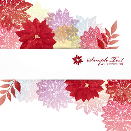 poinsettia: poinsettia background