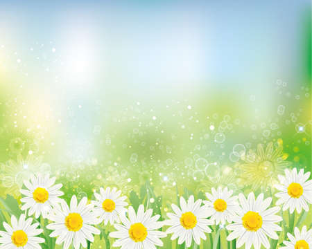 background of daisy Vectores