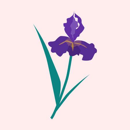 Purple ris flower vector illustration, summer or spring garden
