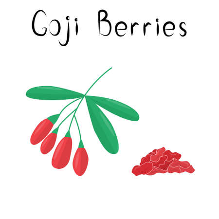 Goji or wolf berries illustration. Healthy detox natural product. Organik dietary supplement fruit. Superfood, berry for homeopathy. Cartoon vector illustration