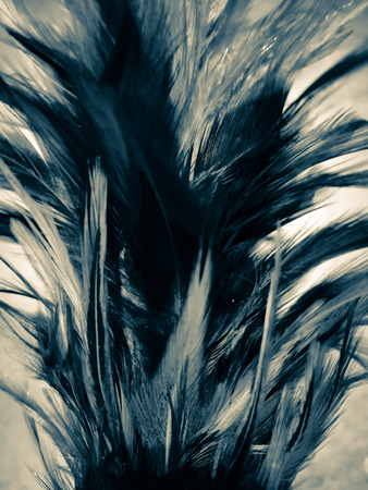 The colorful feather background textures wallpaper 스톡 콘텐츠
