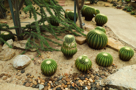 Beautiful cactus in the park garden