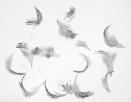 Beautiful white feathers textures background and wallpaper Stock Photo