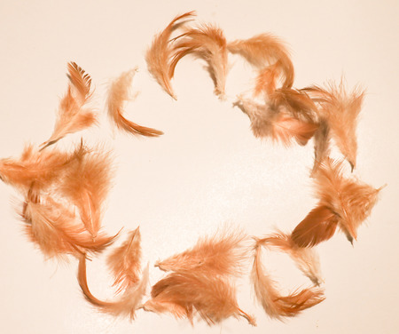 Beautiful colorful pink orange white and black feathers textures background and wallpaper 스톡 콘텐츠