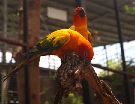 Beautiful Macaw and Parrot birds in the public parks 免版税图像